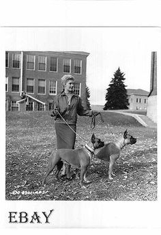 Kim Novak w Dogs Boxers Vintage Photo Five Against The House Candid on Set | eBay