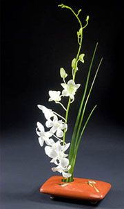 Orchids & some simple foliage. Not a fan of the container but I do really like this design.