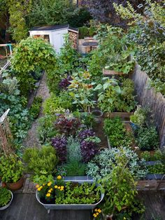 edible garden This beautiful kitchen garden is in Anna Greenlands urban Oxford patch and is a tasty extension of her spice cabinet. From Tagetes Cinnabar (African marigold) to Cucurbita moschata Tromboncino (squash). For more, head to our feature.