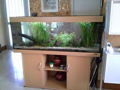 Aquarium Air Pump, France, Aquascaping, Aquariums, Fish Tank, Decoration, Fishbowl, Furniture, Water