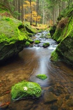 Autumn Stream, Czech Republic | See More