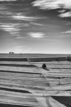 Lines - Landscape from Misentea, Harghita county, RO