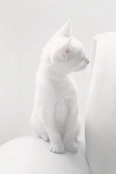 19 White Cat Meme - Tap the link now to see all of our cool cat collections!