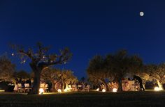 Under the moon and among our olive trees, Verdura Resort, Wedding