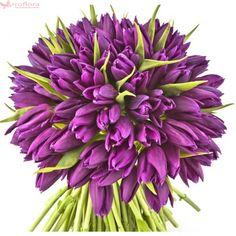 Violet Bloom - Buchet de lalele violet Violet, Bellisima, Tulips, Bouquet, Plants, Bouquet Of Flowers, Bouquets, Plant, Tulip