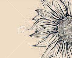 Sunflower Royalty Free Stock Vector Art Illustration