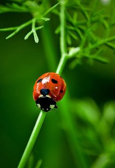 Ladybug with heart - hearts in nature