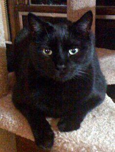 Black Cats & Halloween: Keep Them Safe!