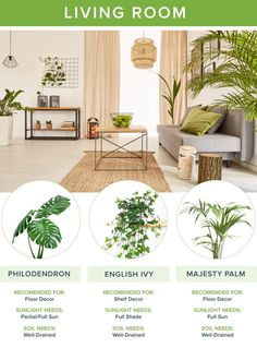 Looking for fresh home decor? Our guide to the best houseplants for every room will help you narrow down your selection and create a healthier home!