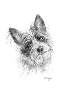 Image result for hunting dog pencil drawing