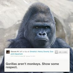 19 Highly Important Zoo Animal Reviews - These Foursquare users did the groundwork so you don't have to.