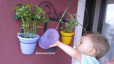 Horta vertical, uma opção para quem quer ter seus próprios temperos, frescos e com muito amor