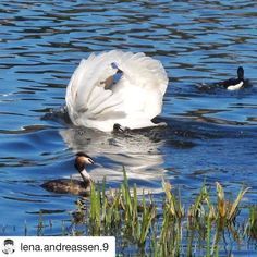 Ta vare på det barnet inne deg. Never stop playing and having fun. #reiseliv #reisetips #reiseblogger #reiseråd  #Repost @lena.andreassen.9 with @repostapp  Birdlife at Østensjøvannet  New blogpost link in bio #oslo#ig_nature#ig_great_pics#ig_photooftheday#ig_shotz#ig_masterpiece#world_shotz#worldbestshot#worldphotographyart