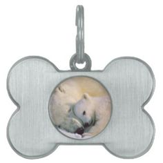 Polar bear cub sleeping on mom's head pet tag
