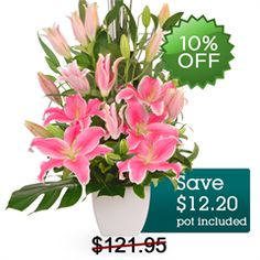Zara - Astound someone special with this incredible reverie of intense pink Oriental lilies, creatively arranged in a ceramic pot.