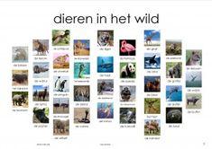 dieren in het wild plaat