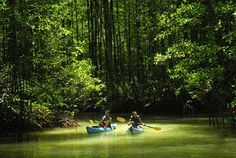River kayaking and exploting wildlife in the Costa Rican rainforest and the mangrove forest Rafting, Snorkel, Mangrove Forest, Honeymoon Destinations, Kayaking, Traveling By Yourself, Things To Do, Tourism, Places To Visit