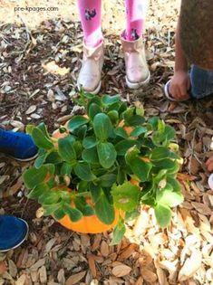 Planting Pumpkin Seeds in a Pumpkin - Pre-K Pages Grow Pumpkins From Seeds, Planting Pumpkin Seeds, Pumkin Seeds, Planting Seeds, Fall Preschool Activities, Learning Activities, Planting For Kids, Pre K Pages, Fun Halloween Crafts