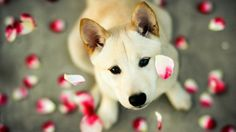 14 Valentine's Day Gifts for Dogs & Dog Lovers - Funny Animals Cute Dog Wallpaper, Ipad Air Wallpaper, Images Wallpaper, Animal Wallpaper, Animals And Pets, Baby Animals, Cute Animals, Best Puppies, Cute Puppies