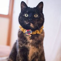 サイズ調節可能な可愛いボタン付き猫の首輪シュシュタイプ【定形外送料無料】S-0001マスタード黄色   ハンドメイドマーケット minne