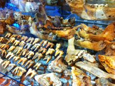 The fossilized remains of the cave bear may sometimes be found today in caves.  The fossil teeth as well as bones that are preserved are aroundm5 million years old. Most of the specimens are from 40,000 to 100,000 years old. The cave bear was preserved through a process called desiccation or dehydration. Teeth are easier to find as teeth are more difficult to breakdown and are preserved more readily than bones. Email rps@rocksandgemscanada.com to find out more Cave Bear, Caves, Fossils, Preserves, Teeth, Minerals, How To Find Out, Jewellery, Decoration
