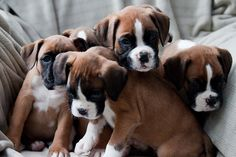 Cute puppy and dog - http://www.1pic4u.com/videos/hunde-babys/suesse-hundebabys-289/