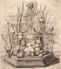cabinet of curiosities illustration ile ilgili görsel sonucu