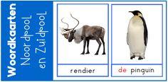 Voor het thema Noordpool en Zuidpool heb ik woordkaarten gemaakt. Ik heb realistische afbeeldingen gebruikt. Ook vind je enkele suggesties voor gebruik. Winter Project, Continents, Arctic, Animals, School, Montessori, Frozen, Penguins, Winter