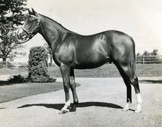 Northern Dancer as a 2 year old