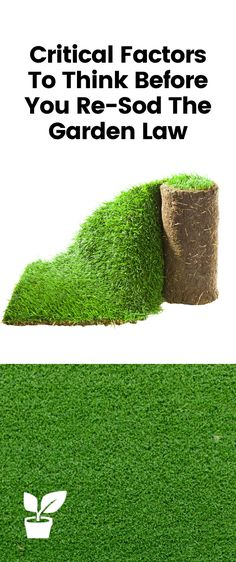 When you are thinking re-sod the garden lawn you need to go through a few points before making the final decision, there are important steps you must go throw to avoid future headaches save time and money.  #ReseedingYourLawn #ReseedingLawn #ReSodLawn #ReSodYard  reseeding lawn in summer | reseeding lawn tips | reseeding lawn spring front yards | reseeding your lawn spring | reseeding lawn fall | reseeding your lawn fall | reseeding lawn with dogs | how to re sod.