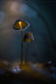 . : like a dream : . by Martin Pfister - http://ift.tt/1GAHwbY