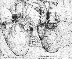 DaVinci - anatomical heart