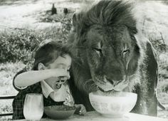 A little girl and a lion enjoying breakfast. Naturally.