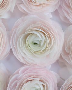 Remember those beautiful 'Hanoi' Cloni Ranunculus which I posted on Instagram a couple of days ago? Well this is what they look like when their petals unfurl...Heavenly! #underthefloralspell