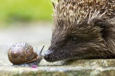 Face to face with a hedgehog by Paul Hobson