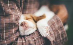 Die Aufzucht eines Welpen ist für jeden verantwortungsvollen Hundebesitzer eine große Herausforderung. Damit hier nichts schief geht, haben wir für Sie alle wichtigen Infos zusammengefasst.