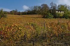 Dopo la vendemmia , Rocca Grimalda, Alto Monferrato