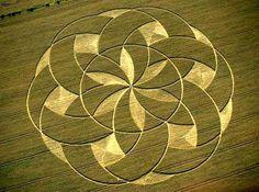 crop / nature mandala. English countryside