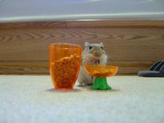 """Gerbils love sunflower seeds.  This is because when they first came to our planet in their tiny spaceships, they stayed because of the Sunflowers.  Hey, that guy with the hair on TV would say, """"It's possible that it is because they descended from aliens!""""  ...OK maybe not...but it is cute to think of them in spaceships."""