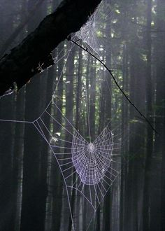Coming across a broken web when tracking a human serves as an indicator as to where your friend is headed if the are lost in the woods. To learn more check out this blog post! Itsy Bitsy Spider, Spider Webs, Spider Art, Spider Silk, Wood Spider, Forest Art, Deep Forest, Lightbox, Nature Photography