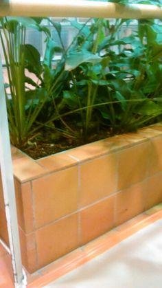 Wilhelmiina kuntoutusalue istutusallas 2/7 kasvia