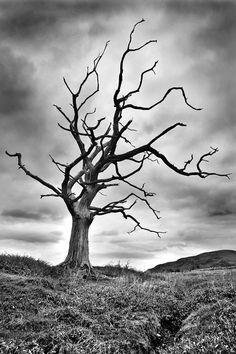 The Dead Tree by ~sebastianwuttke on deviantART