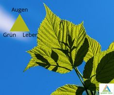 Augen werden stark mit der Farbe grün Ein Tipp von Quantum-wave.eu Stark, Kung Fu, Plant Leaves, Waves, Plants, Movie Posters, Self, Eyes, Tips