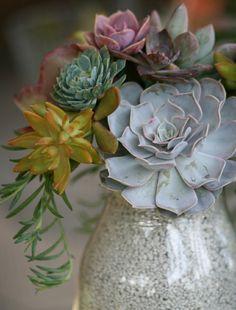 Pretty arrangement of succulents...I don't want to cut them to make an arrangement!
