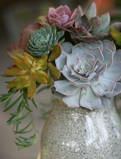 I love a collection of succulent stems in a small vase!