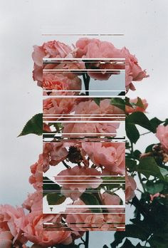 floral photography flowers photoshop glitch lines cut outs and paste