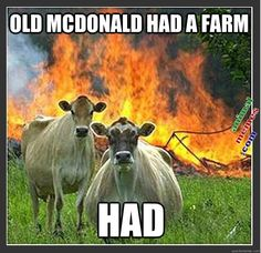 We have collected few very funny animals memes, we hope you will enjoy them a lot, feel free to share the best one's with your friends and keep enjoy.Read This Top 26 Animals Humor memes Funny Shit, Haha Funny, Funny Cute, Funny Jokes, Funny Stuff, Funny Farm, Funny Sayings, Farm Humor, Funny Vegan Memes