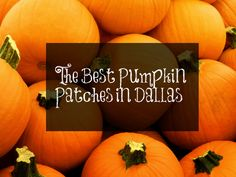 Looking for some family fun? Check out these pumpkin patches in the Dallas / Fort Worth area!