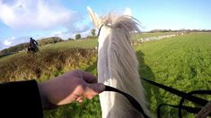December Today we hunted with the North Galway Hunt, as they were meeting just 2 miles from our barn. Cormac was riding Sierra, Mike on Joey and J. Cross Country Jumps, Beach Rides, Show Jumping, Winter Solstice, Cob, Equestrian, Ireland, Hunting, Deer Hunting