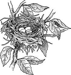 bird's nest clip art